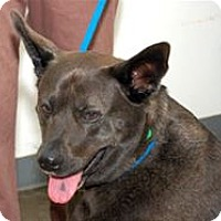 Adopt A Pet :: Kilo - Mountain Home, AR