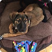 Adopt A Pet :: Luna - Baltimore, MD