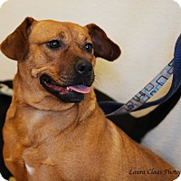 Adopt A Pet :: Willow-LOVES DOGS! - Oak Ridge, NJ