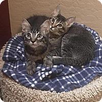 Adopt A Pet :: Joey - Tempe, AZ