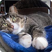Adopt A Pet :: Gilligan -at Woodbury Petsmart - Roseville, MN