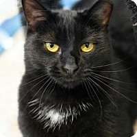 Adopt A Pet :: Brie - Aiken, SC