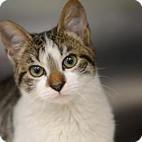Adopt A Pet :: Tristan170226 - Atlanta, GA