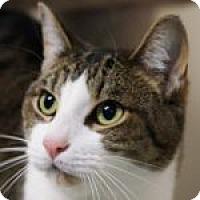 Adopt A Pet :: Blake - Medford, MA
