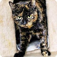 Adopt A Pet :: Georgia - Markham, ON