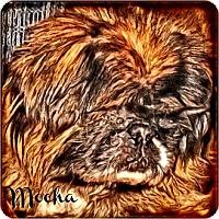 Adopt A Pet :: Mocha-NJ - Mays Landing, NJ