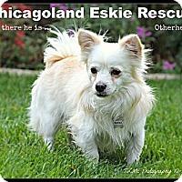 Adopt A Pet :: Otis - Elmhurst, IL