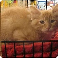 Adopt A Pet :: Pablo - The Colony, TX