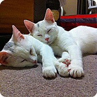 Adopt A Pet :: Max and Lucy - Halifax, NS
