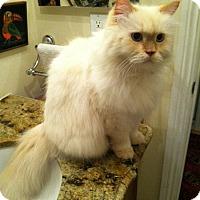 Adopt A Pet :: Cubby - Laguna Woods, CA