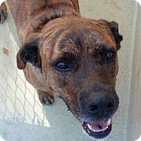Adopt A Pet :: Jake - Virginia Beach, VA