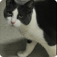 Adopt A Pet :: Tommy - Rockaway, NJ