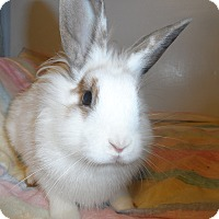 Adopt A Pet :: Bella - Hillside, NJ