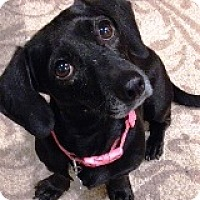 Adopt A Pet :: Ericka Esperanza - Houston, TX