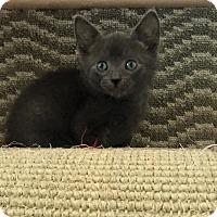 Adopt A Pet :: Cole - Island Park, NY