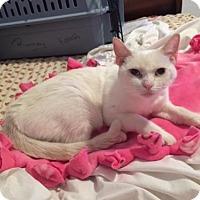 Adopt A Pet :: Vanessa - Phoenix, AZ
