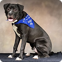 Adopt A Pet :: Sneezy - Livonia, MI