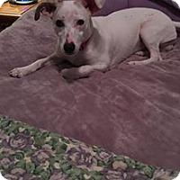 Adopt A Pet :: MILO - Cadiz, OH