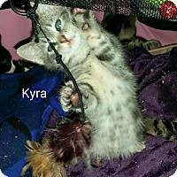 Adopt A Pet :: Kyra - Island Park, NY