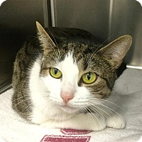 Adopt A Pet :: Trouble - Webster, MA