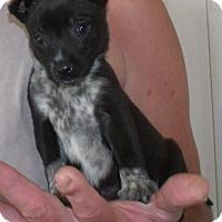 Adopt A Pet :: JENNA - Corona, CA