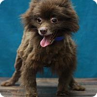 Adopt A Pet :: Mercedes - Waldorf, MD
