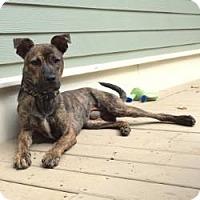 Adopt A Pet :: Benjamin - Willingboro, NJ