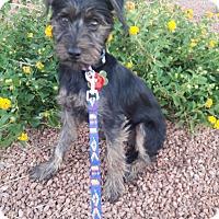 Adopt A Pet :: Theodore - Las Vegas, NV