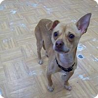 Adopt A Pet :: Chet - Oak Park, IL