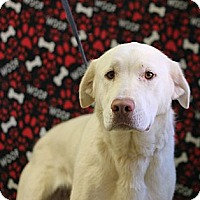 Adopt A Pet :: Delilah - Roosevelt, UT