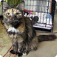 Adopt A Pet :: Elaine - Alexandria, VA