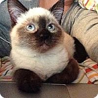 Adopt A Pet :: Neiko - Davis, CA