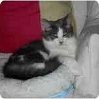 Adopt A Pet :: Tiffany - Columbus, OH