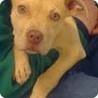 Adopt A Pet :: Landon - Justin, TX