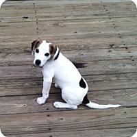 Adopt A Pet :: Sophie - Richmond, VA