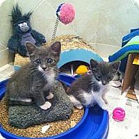 Adopt A Pet :: Ginger & Geri - Island Park, NY