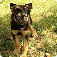 Adopt A Pet :: Easton - Brattleboro, VT