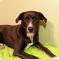 Adopt A Pet :: Gwen - Russellville, KY