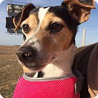 Adopt A Pet :: Lumi in Longview - Dallas/Ft. Worth, TX