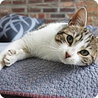 Adopt A Pet :: Corey - Brooklyn, NY