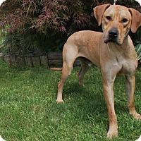 Adopt A Pet :: Riley - Baden, PA