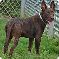 Adopt A Pet :: Berta - Athens, GA