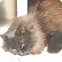 Adopt A Pet :: Patrick - Olney, IL