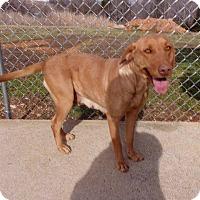 Adopt A Pet :: Mariah - Springfield, TN