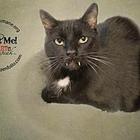 Adopt A Pet :: Reno - Belton, MO