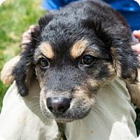Adopt A Pet :: Sweet Dee - Suwanee, GA