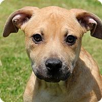 Adopt A Pet :: Tanga - Glastonbury, CT