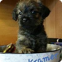 Adopt A Pet :: Kramer - Arcadia, FL