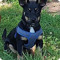 Adopt A Pet :: Matilda (POM DC) - Washington, DC
