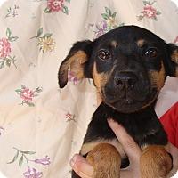 Adopt A Pet :: Sarafina - Oviedo, FL